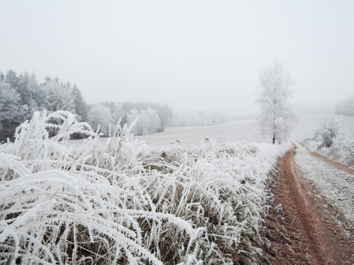 winter_landscape_view_meadow_rime_path_bush_snowy-1375739.jpg!d